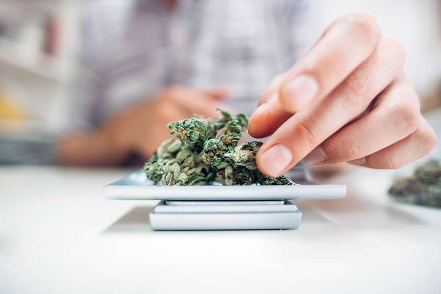 human hands weighing marijuana with digital weights