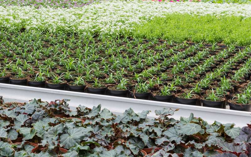 The Advantages of a Commercial Greenhouse Tent
